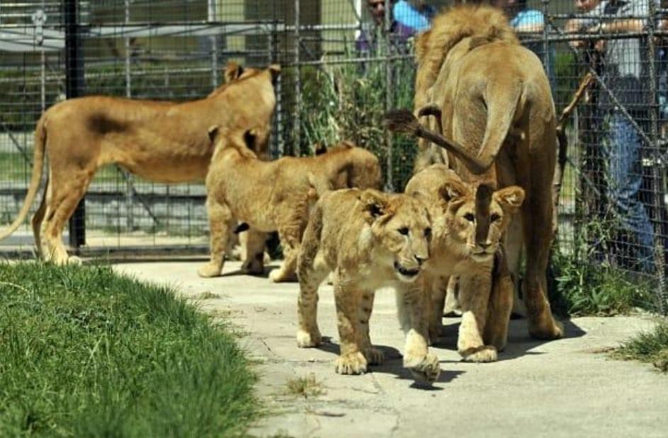 حديقة الحيوانات فاروق يالجين
